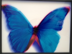 HIROSHI SUGIMOTO BUTTERFLY I 2000 Videoinsight® Collection