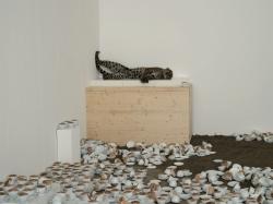 Paola Pivi, Don't disturb me, 2007, Collezione Videoinsight®