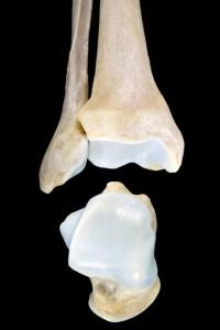 Nº41(Ankle_bones)60x90